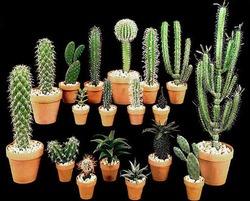 Комнатные растения раст-40