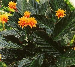 Комнатные растения раст-71