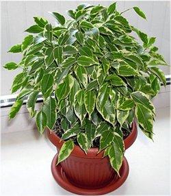 Комнатные растения раст-16
