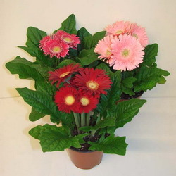 Комнатные растения раст-110