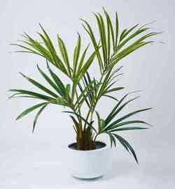 Комнатные растения раст-59