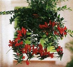 Комнатные растения раст-72