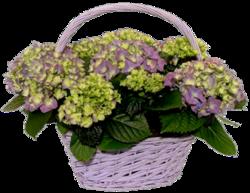 Цветочные корзины 90
