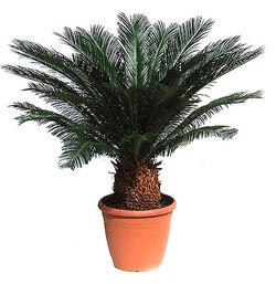 Комнатные растения раст-56