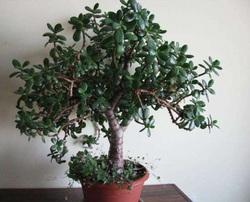 Комнатные растения раст-87