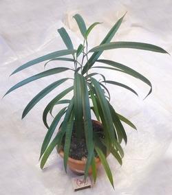 Комнатные растения раст-22