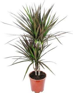 Комнатные растения раст-63