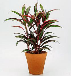 Комнатные растения раст-48
