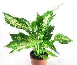 Комнатные растения 10132