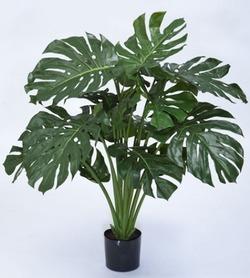 Комнатные растения раст-92