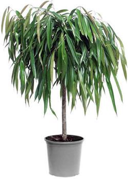 Комнатные растения раст-24