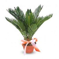 Комнатные растения раст-54