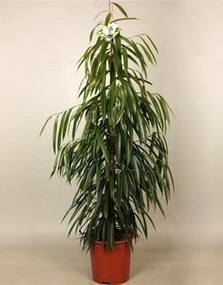 Комнатные растения раст-23
