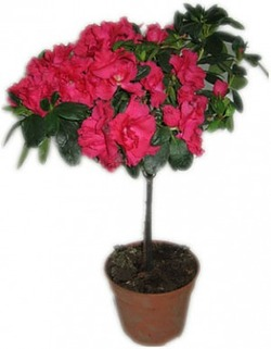 Комнатные растения раст-122