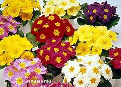 Комнатные растения раст-53