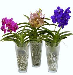 Комнатные растения раст-7