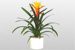 Комнатные растения раст-73