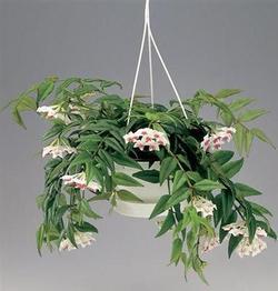 Комнатные растения раст-60