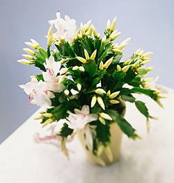 Комнатные растения раст-50