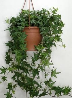 Комнатные растения раст-77