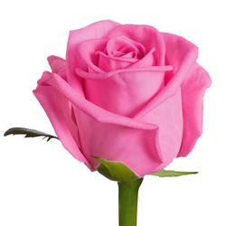 Розы 125