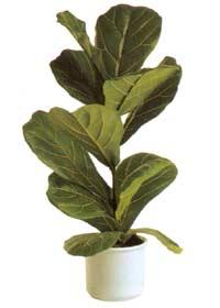 Комнатные растения раст-28