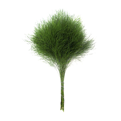 Зелень 147