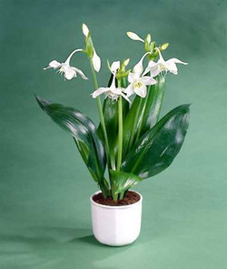 Комнатные растения раст-46