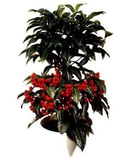 Комнатные растения раст-42
