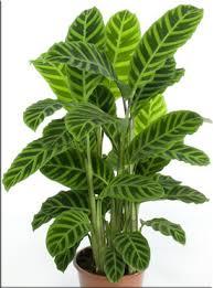 Комнатные растения раст-67