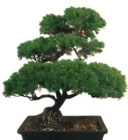 Комнатные растения раст-114