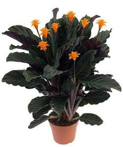Комнатные растения раст-70