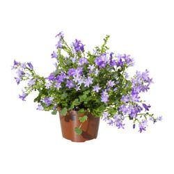 Комнатные растения раст-76