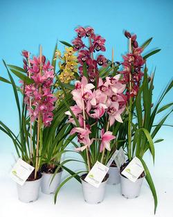 Комнатные растения раст-4