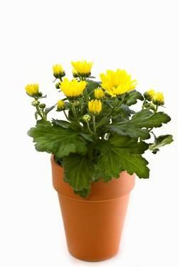 Комнатные растения раст-45