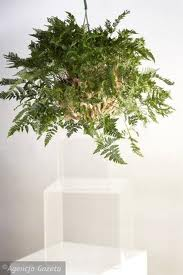 Комнатные растения 10135