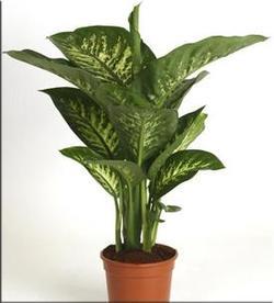 Комнатные растения раст-134