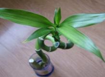 Комнатные растения 10131