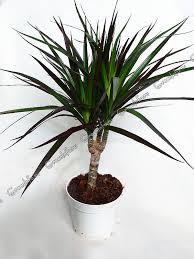 Комнатные растения раст-64