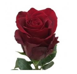 Розы 64
