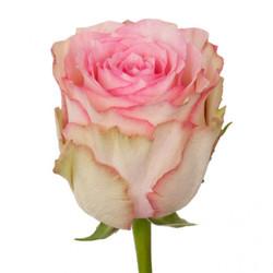 Розы 123