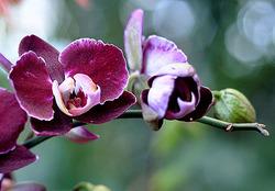 Комнатные растения раст-2