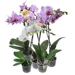 Комнатные растения раст-1