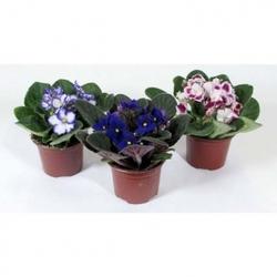 Комнатные растения раст-140