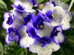 Комнатные растения раст-139