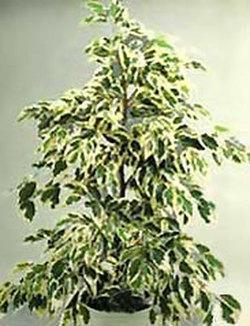 Комнатные растения раст-15