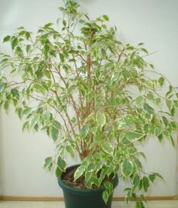 Комнатные растения раст-14