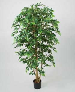 Комнатные растения раст-27