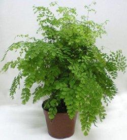 Комнатные растения раст-96
