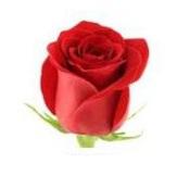 Розы 63